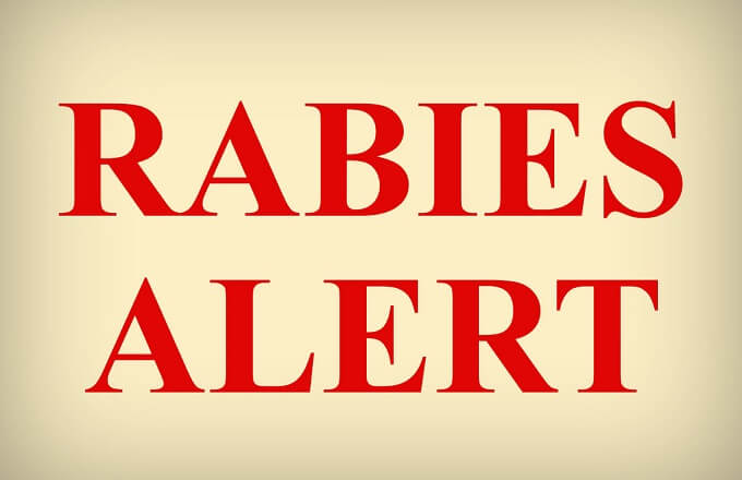 Rabies Confirmed in Animals Found in Superstition Mountain Area