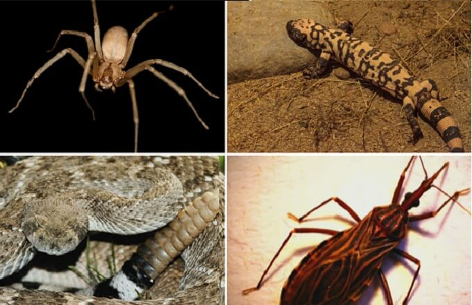 There are a handful of venomous creatures need to stay away from.